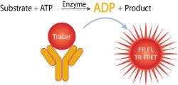Transcreener® ADP² Kinase Assays by BellBrook Labs product image