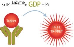 Transcreener® GDP GTPase Assays by BellBrook Labs product image