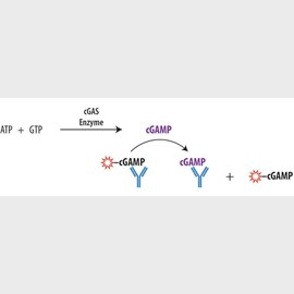 Transcreener<sup>®</sup> cGAMP cGAS Assay by BellBrook Labs product image