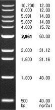 1 kb DNA Ladder, 500 - 10,200 bp, 2,500 µl (500 µl x 5) by Bioneer product image