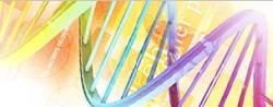Gene Synthesis Services by Bioneer thumbnail
