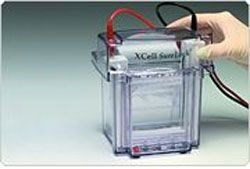 XCell SureLock™ Mini-Cell Electrophoresis System by Thermo Fisher Scientific Invitrogen product image