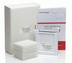 XCell II™ Blot Module by Thermo Fisher Scientific Invitrogen product image
