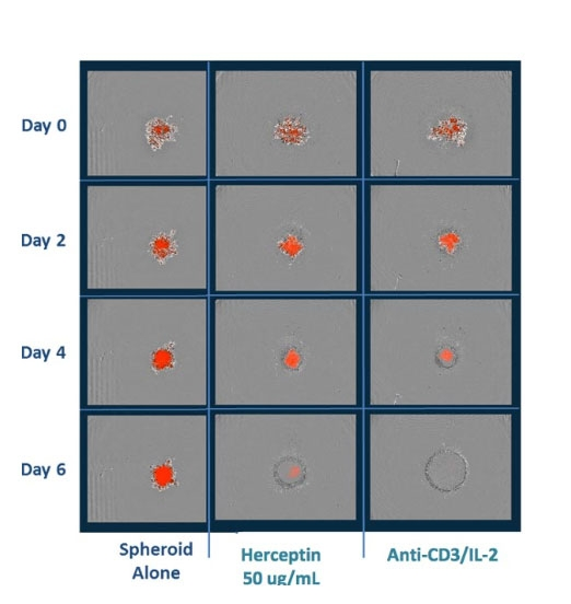 Incucyte® Immune Cell Killing Assays by Sartorius Group thumbnail