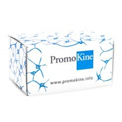 Angiogenesis Assay Kit by PromoCell GmbH thumbnail