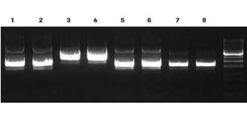 Genopure Plasmid Maxi Kit by MilliporeSigma, a business of Merck KGaA Darmstadt Germany thumbnail