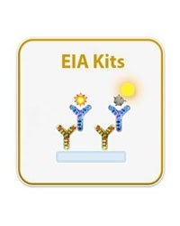 Human/Mouse/Rat Glucagon EIA Kit by RayBiotech Inc. product image
