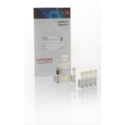 Qubit™ RNA HS Assay Kit by Thermo Fisher Scientific product image