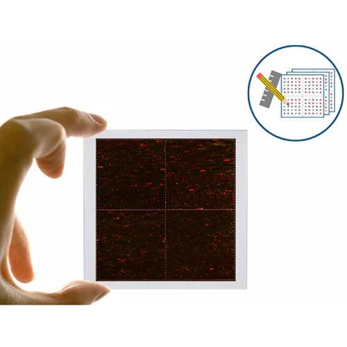 PEPperCHIP<sup>®</sup> Signature Discovery Microarray by PEPperPRINT GmbH thumbnail