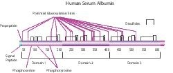 Albumin from human serum by Merck KGaA, Darmstadt, Germany thumbnail