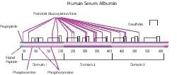 Albumin from human serum by Merck KGaA, Darmstadt, Germany product image