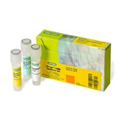 iScript™ cDNA Synthesis Kit, 25 µl (170-8890) by Bio-Rad product image