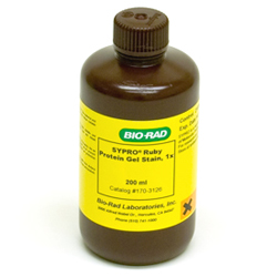 SYPRO Ruby Protein Gel Stain (170-3126) by Bio-Rad thumbnail