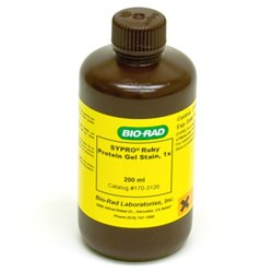 SYPRO Ruby Protein Gel Stain (170-3126) by Bio-Rad product image