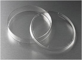 Corning® 150mm Not TC-Treated Culture Dish by Corning Life Sciences thumbnail