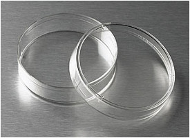 Corning® 60mm TC-Treated Culture Dish by Corning Life Sciences thumbnail