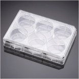 Corning® PureCoat™ Amine 6 Well Plate, 5/Case