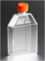 Corning® Synthemax®-R Surface 75cm² Rectangular Canted Neck Cell Culture Flask with Vent, Individually Wrapped,  Cap, Sterile, 12/Case by Corning Life Sciences thumbnail