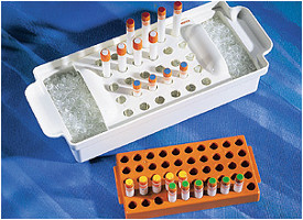 Corning® Polypropylene Cryogenic Vial Rack, Holds 50 Vials by Corning Life Sciences thumbnail