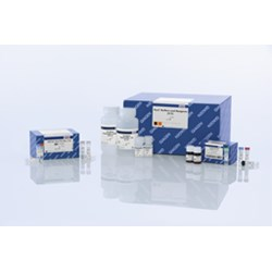 UGT1A1 Pyro Kit (24) by QIAGEN product image