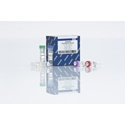 QIAGEN OneStep RT-PCR Kit (100) by QIAGEN product image