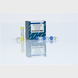 REPLI-g FFPE Kit (100) by QIAGEN product image