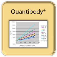 Human Inflammation Array Q3 by RayBiotech Inc. product image