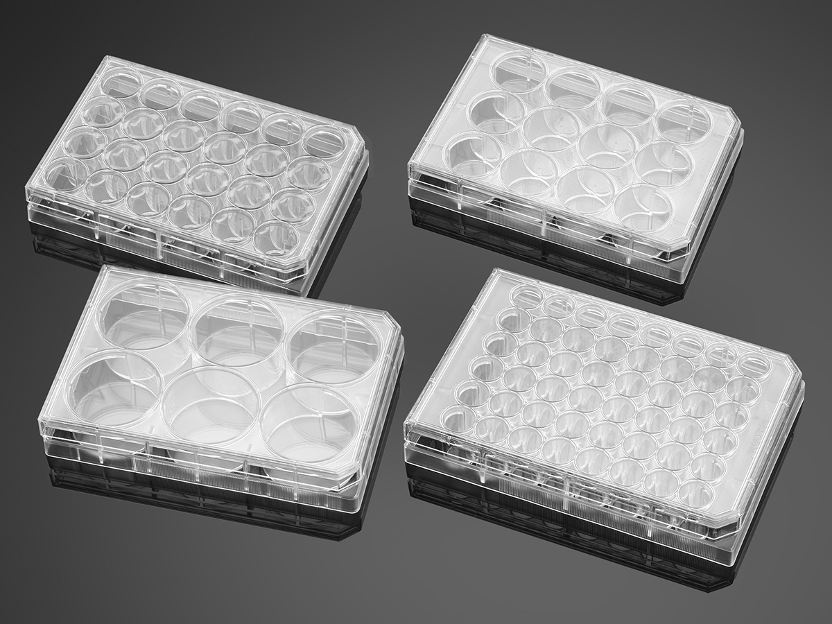 Falcon® 48-well Clear Flat Bottom TC-treated Cell Culture Plate, with Lid, Individually Wrapped, Sterile, 50/Case by Corning Life Sciences thumbnail