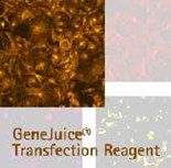 GeneJuice® Transfection Reagent