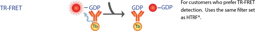 Transcreener® GDP GTPase Assays by BellBrook Labs thumbnail