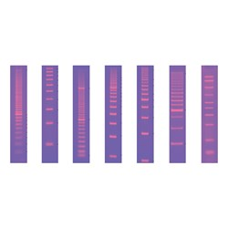 Molecular Rulers by Bio-Rad product image