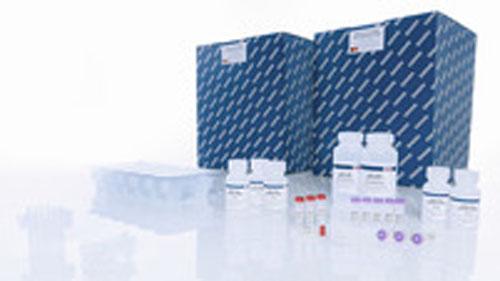 Qiaamp Viral Rna Mini Qiacube Kit 240 From Qiagen Selectscience