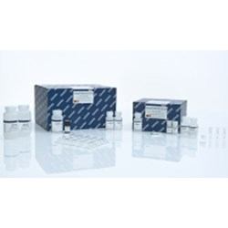 QIAamp DNA Mini Kit (250) by QIAGEN product image