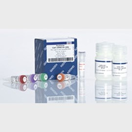 FastLane Cell cDNA Kit (50) by QIAGEN product image