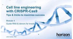 Cell line engineering with CRISPR-Cas9: Guide RNA & donors for knock-in