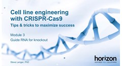 Cell line engineering with CRISPR-Cas9: Guide RNA for knockout